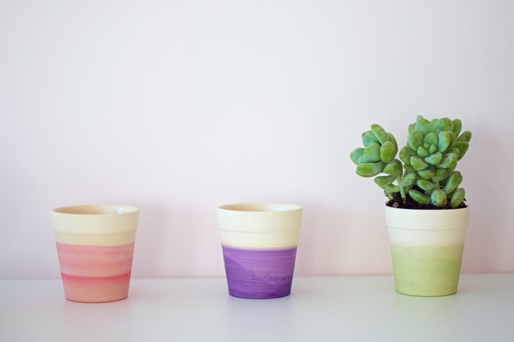 cactus and succulent pots - one brass fox