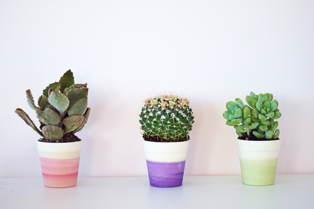 DIY dip dye cactus pots - one brass fox