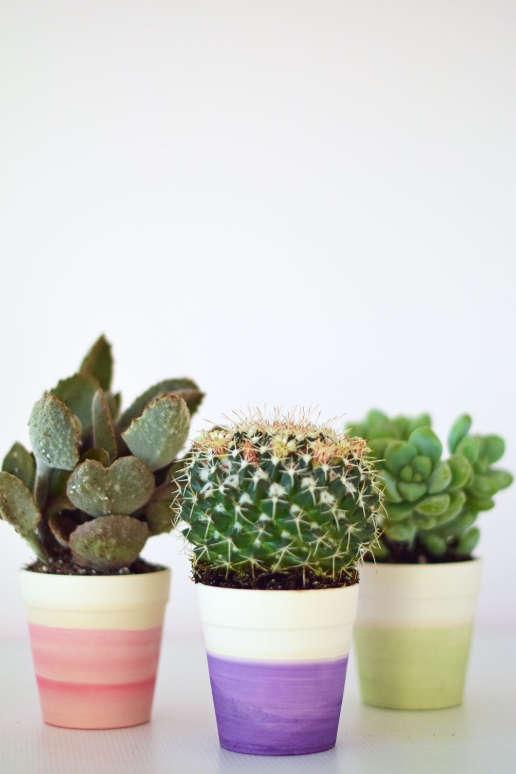 DIY dip dye cactus pot - one brass fox