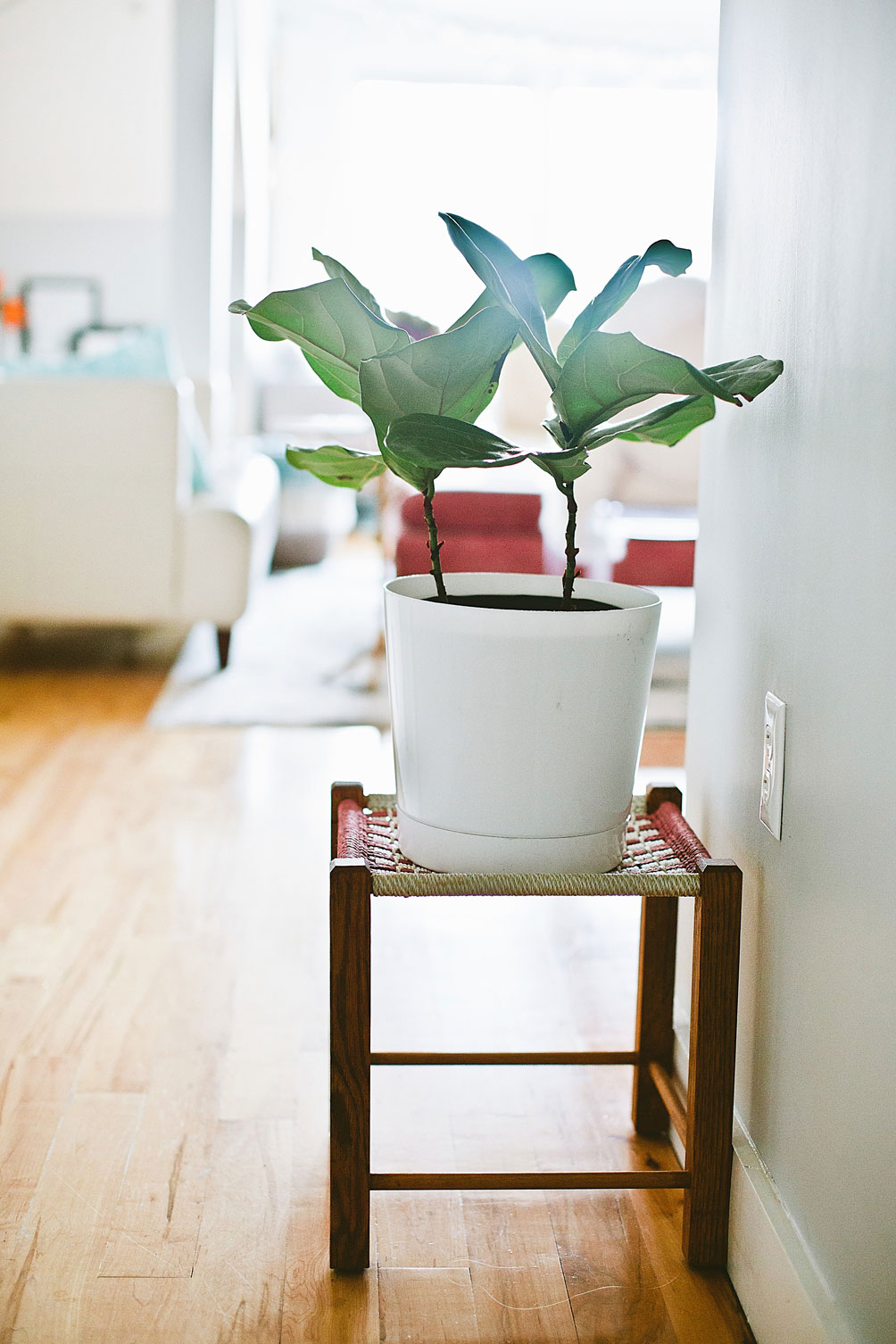 decorating-with-houseplants-2