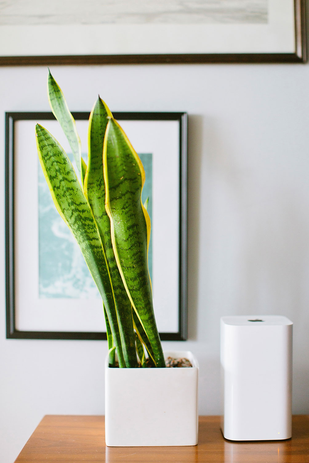decorating-with-houseplants-3