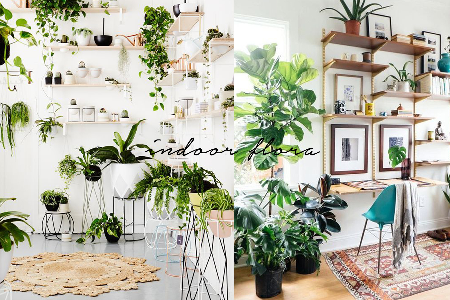 pantone greenery color of the year indoor plant inspiration